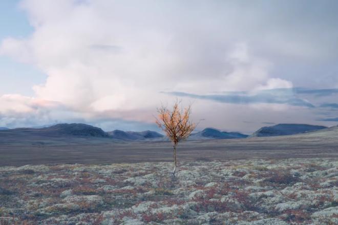 Den sjette årstiden i fjellet